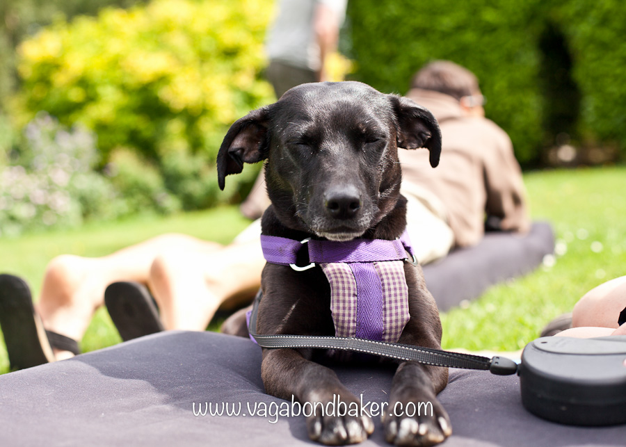 Molly, our camper van bed makes wonderful sun loungers!
