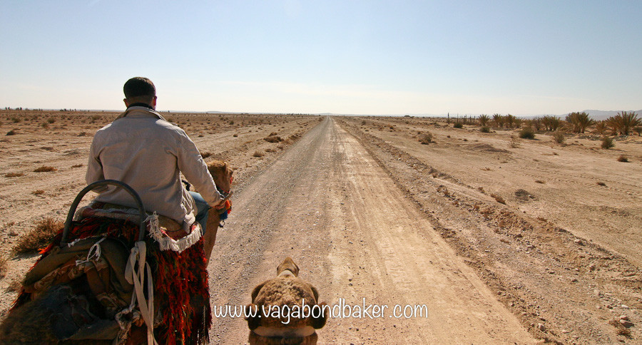 Riding camels across the Syrian desert