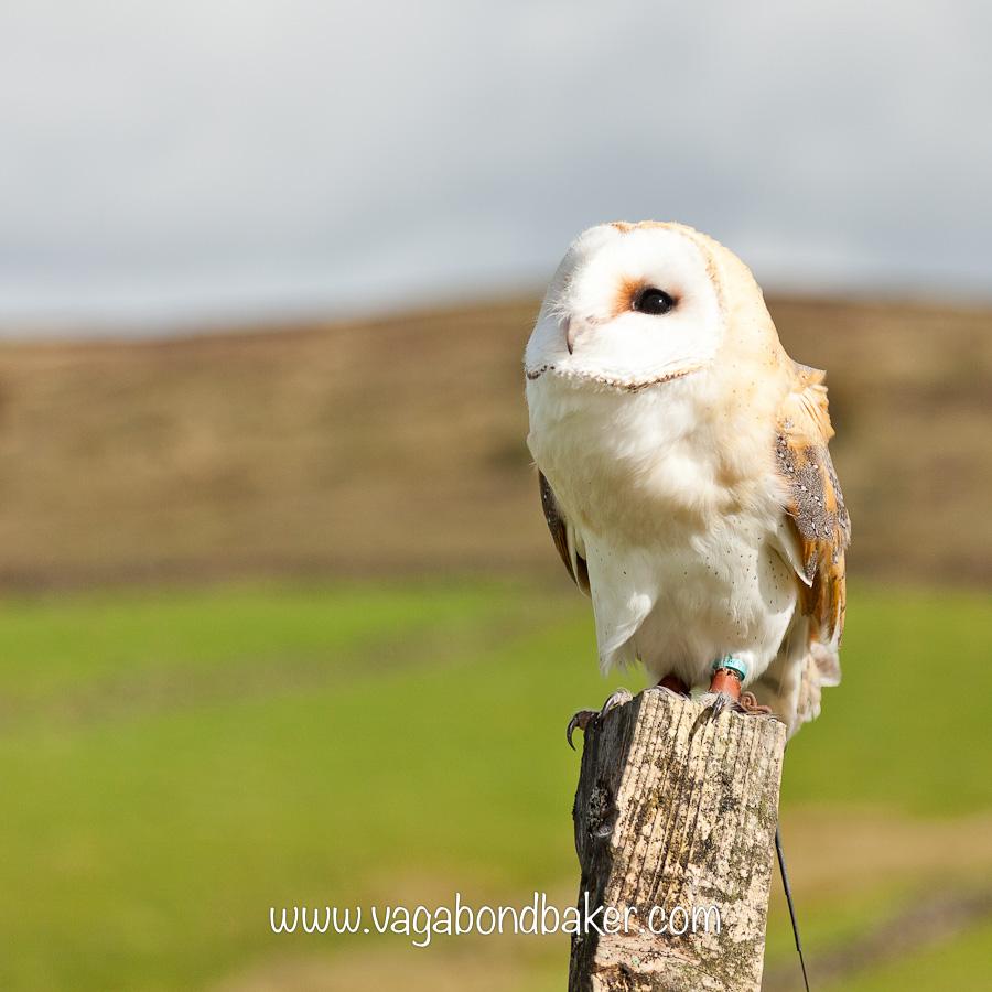Beautiful Birds of Prey {via a Photography Workshop}