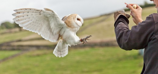 Beautiful Birds of Prey {via a Photography Workshop}