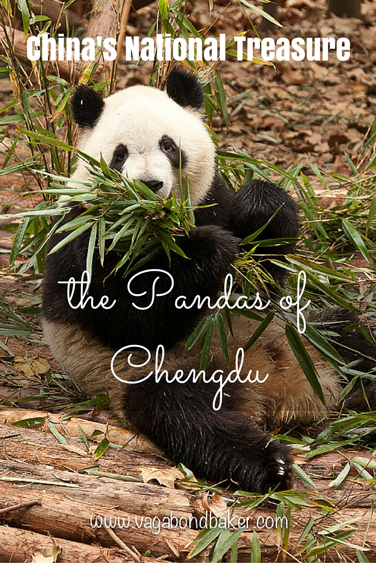The Pandas of Chengdu