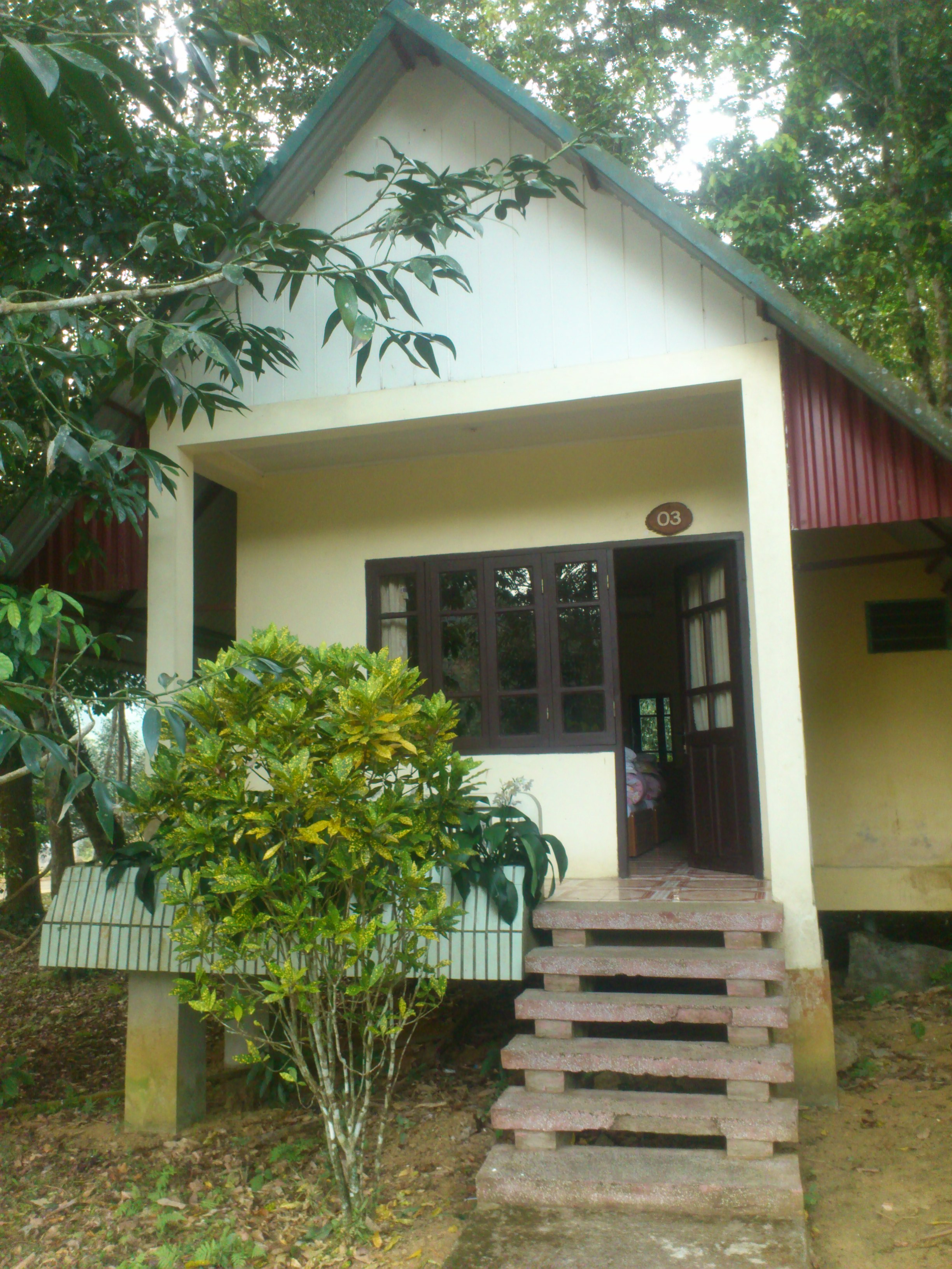 Our little home in the Jungle