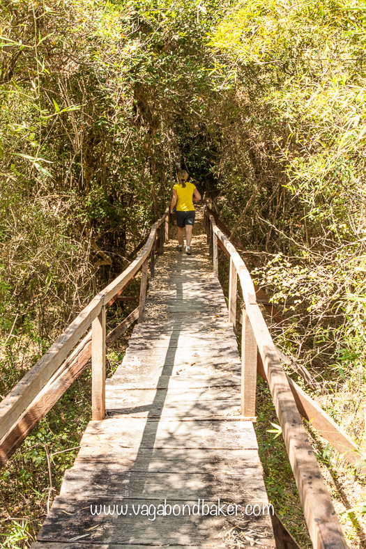 A boardwalk through part of the jungle
