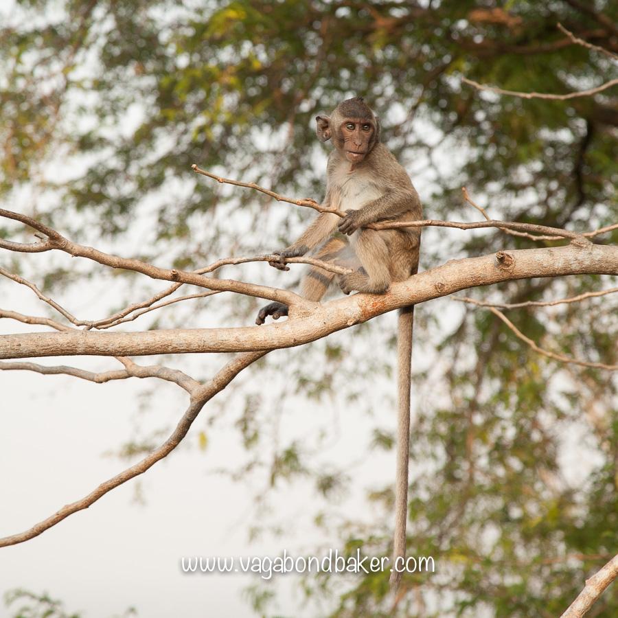 Battambang | Cambodia-2322