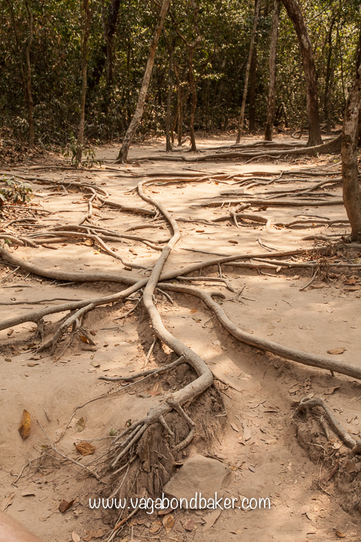 The tangled roots on the walk up to the waterfall.