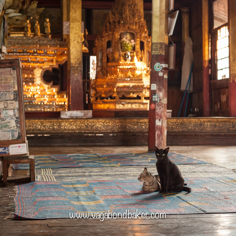 Nga Hpe Kyaung: the Jumping Cat Monastery