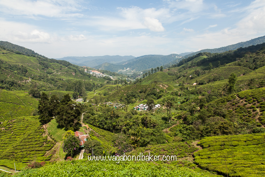 Tea Plantations | Cameron Highlands