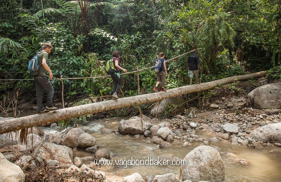 Cameron Highlands | Malaysia