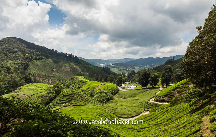 Cameron Highlands, Malaysia, Boh Sungei Palas Tea Estate