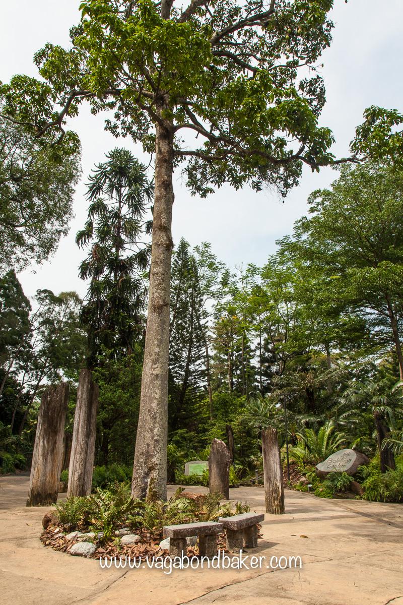 Singapore Botanic Gardens, free things to do in Singapore