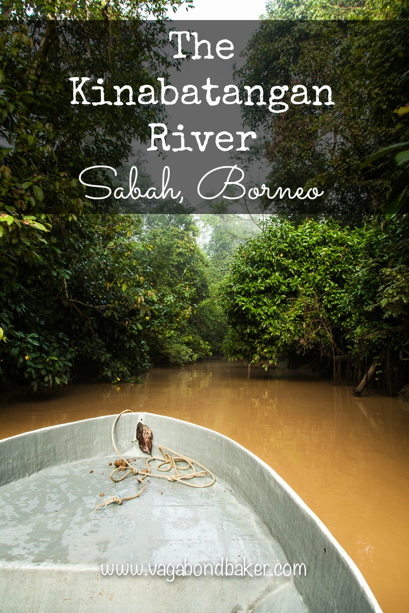 The Kinabatangan River:  visiting on a budget. Sabah, Borneo