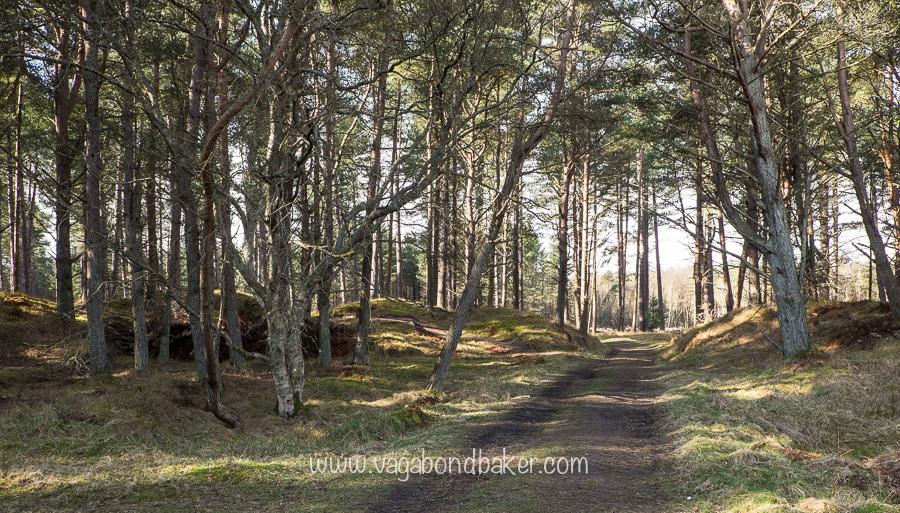 Tensmuir Forest