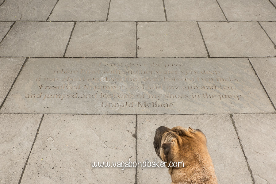 Bo the dog reads Donald McBean's quote