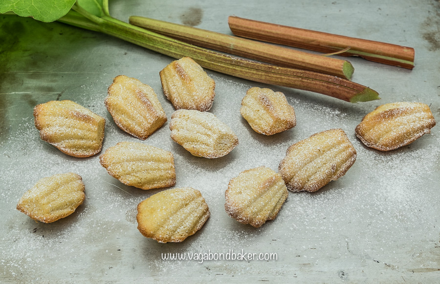 Rhubarb and Vanilla Madeleines
