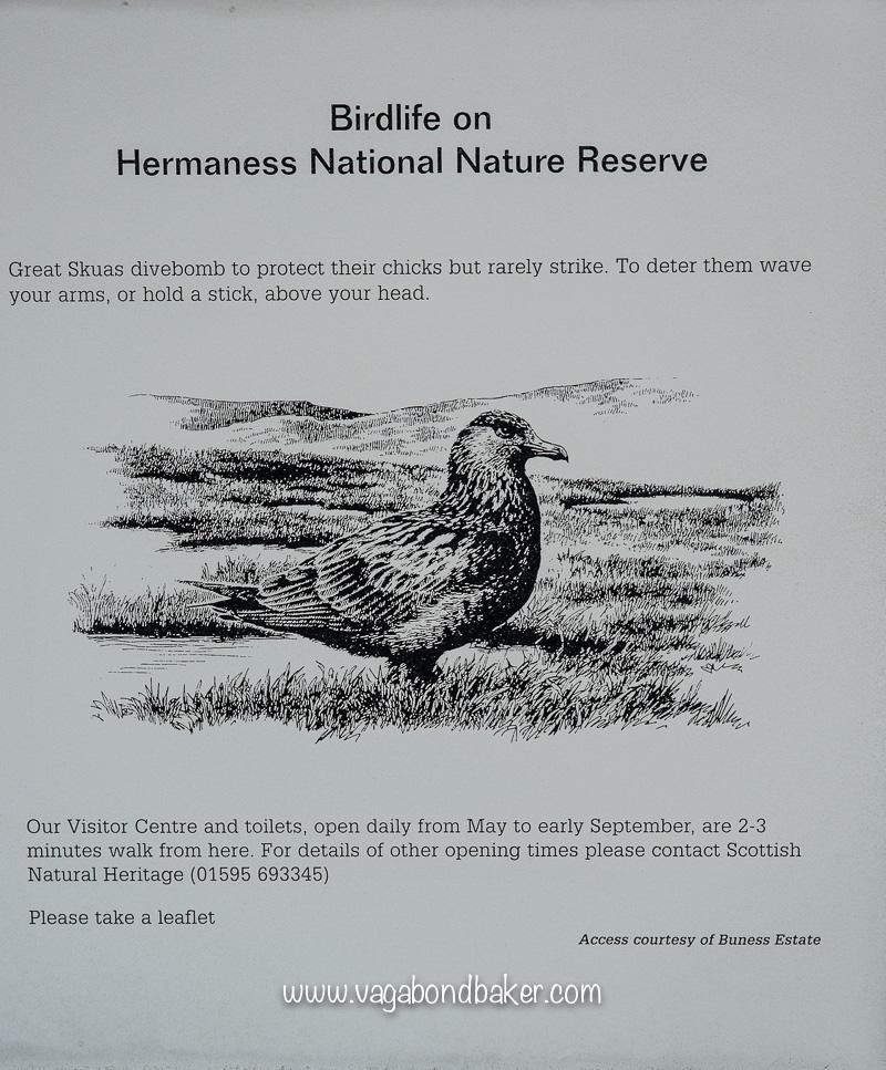 Shetland Hermaness