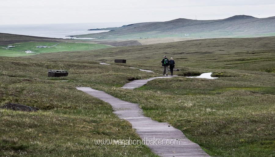 Hermaness boardwalk to the cliffs