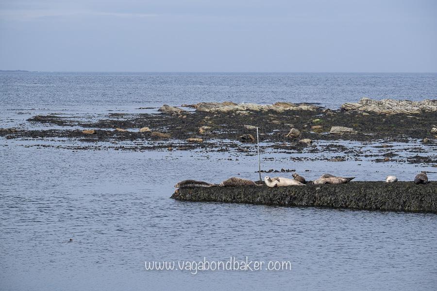 Seals at Sandsayre