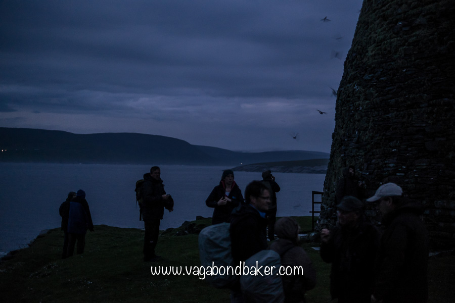 Storm Petrels swirl around the broch