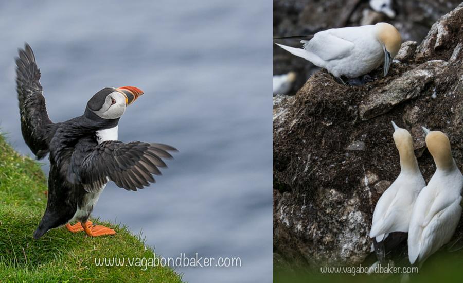 Shetland Wildlife-3