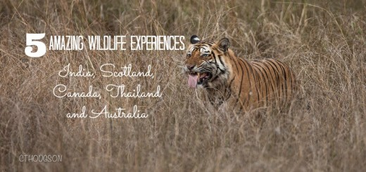 5 amazing wildlife experiences 1