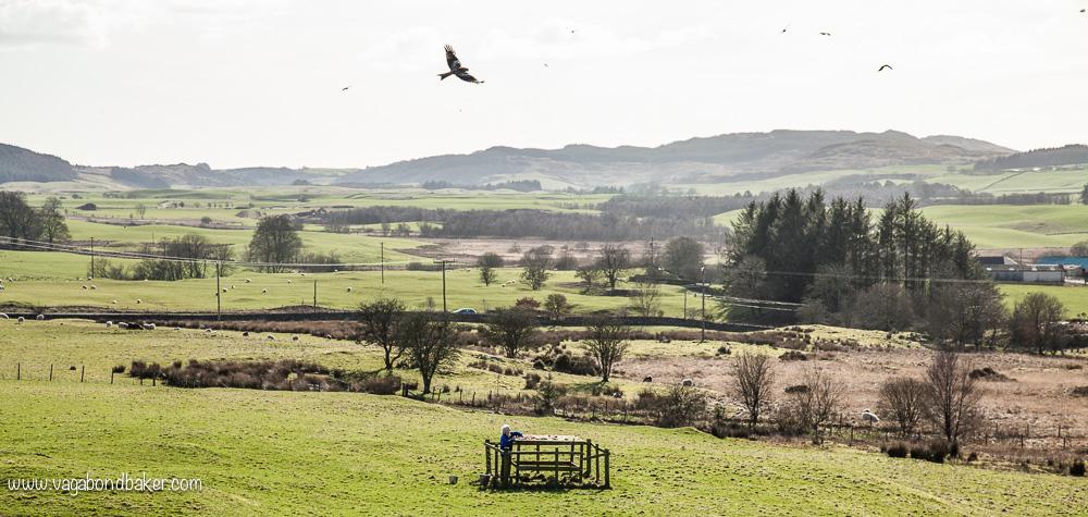 Bellymack Hill Farm