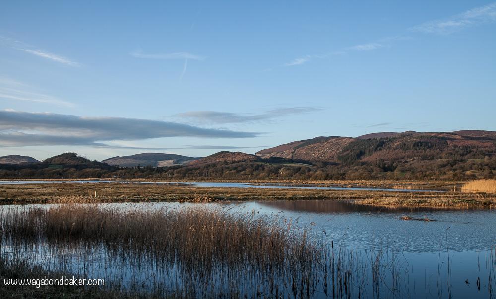 WWT Caerlaverock // Solway Firth // Scotland