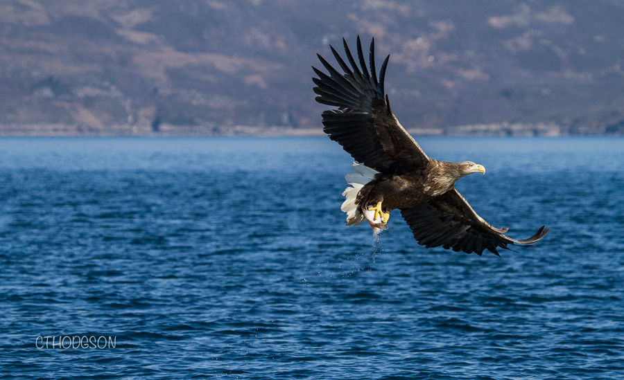 Skye Sea Eagles