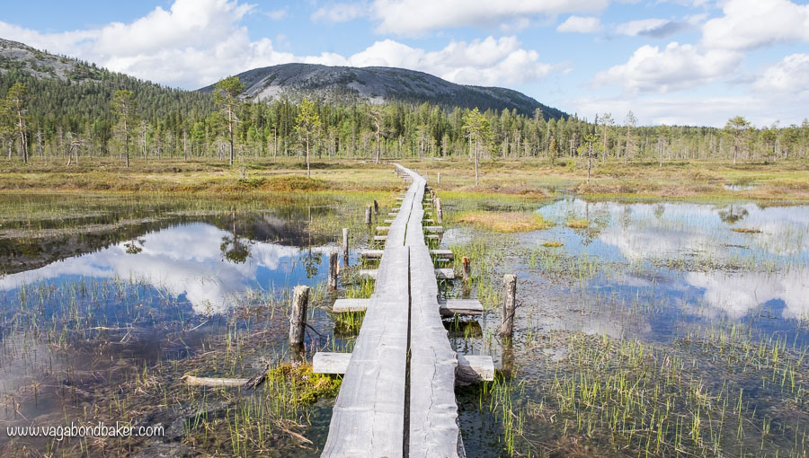 Finland Summer Pyhä-Luosto